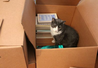 Tips To Pack And Move Your Books During Relocation